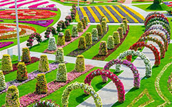 9th place the Miracle Garden in Dubailand